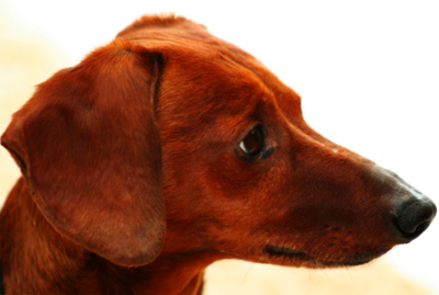 untitleddog
